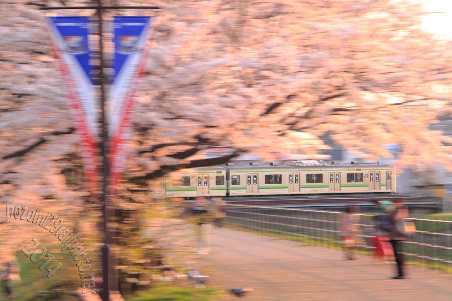 sakura-hama_01_