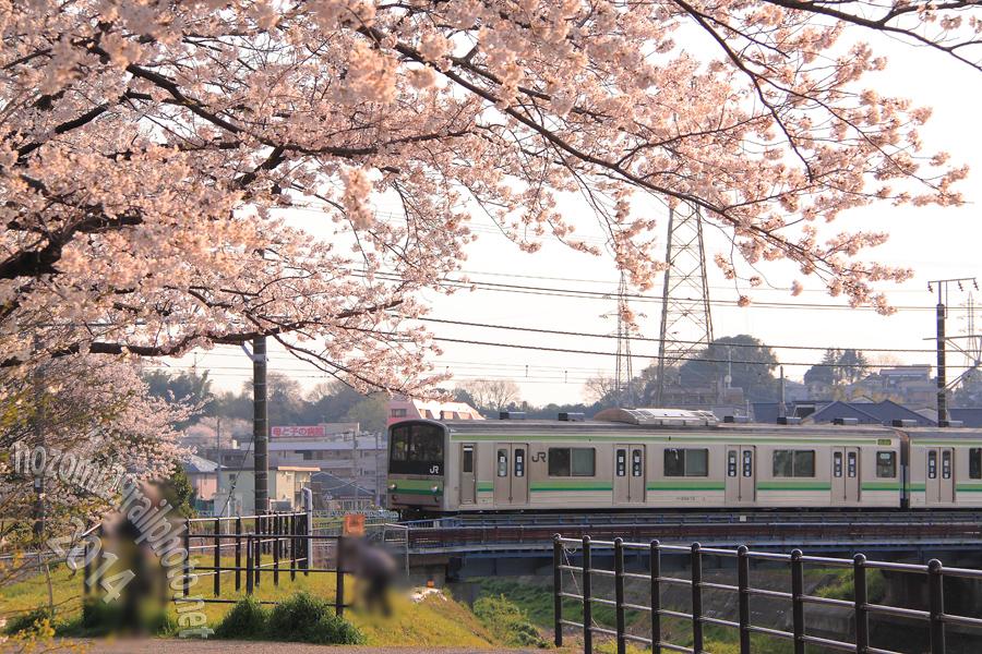 sakura-hama_02_
