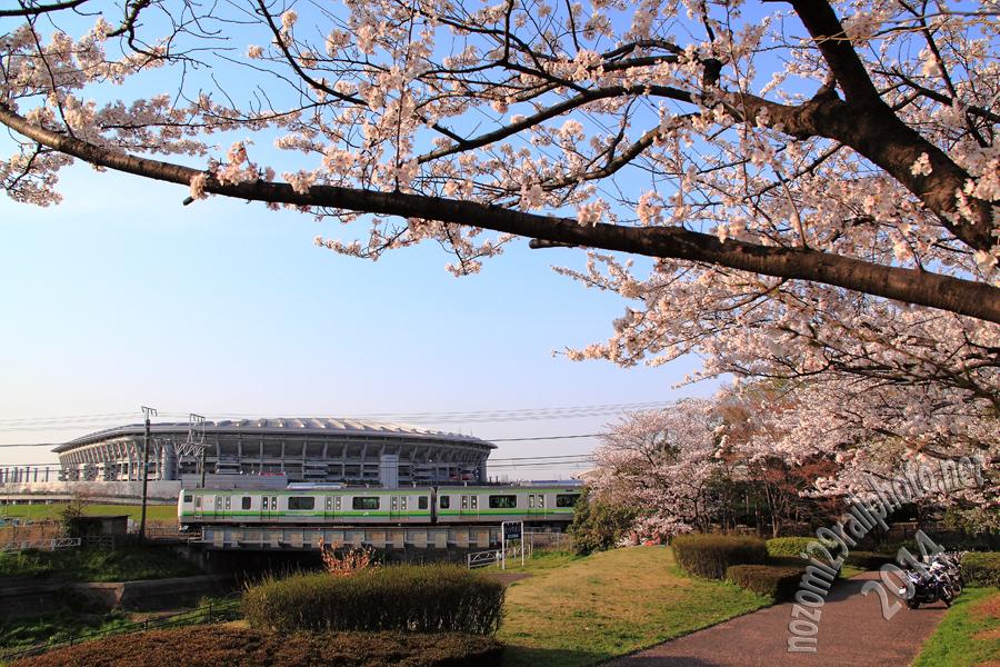 sakura-hama_09_