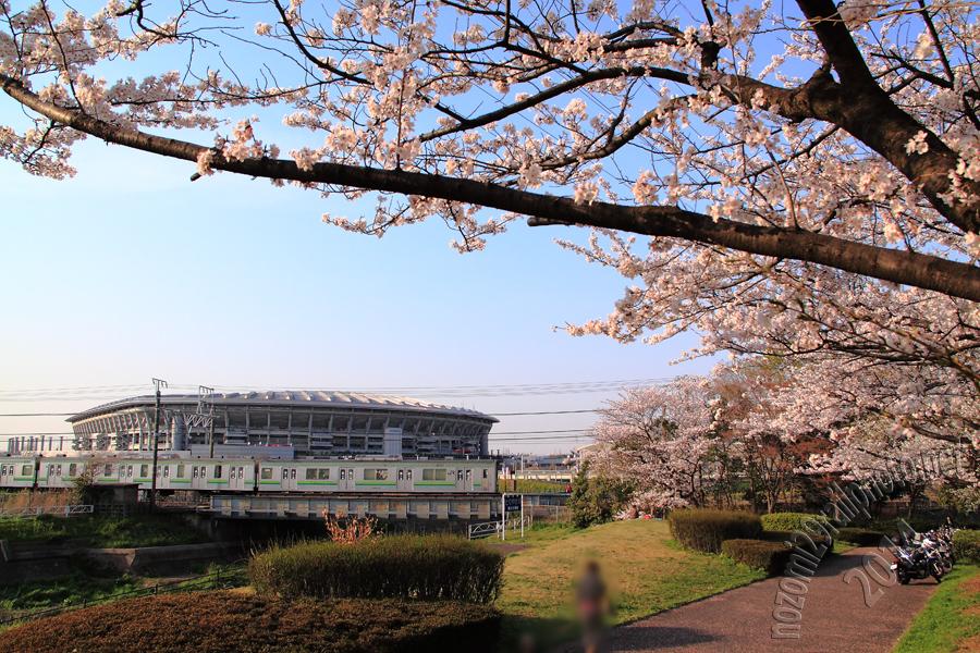 sakura-hama_10_