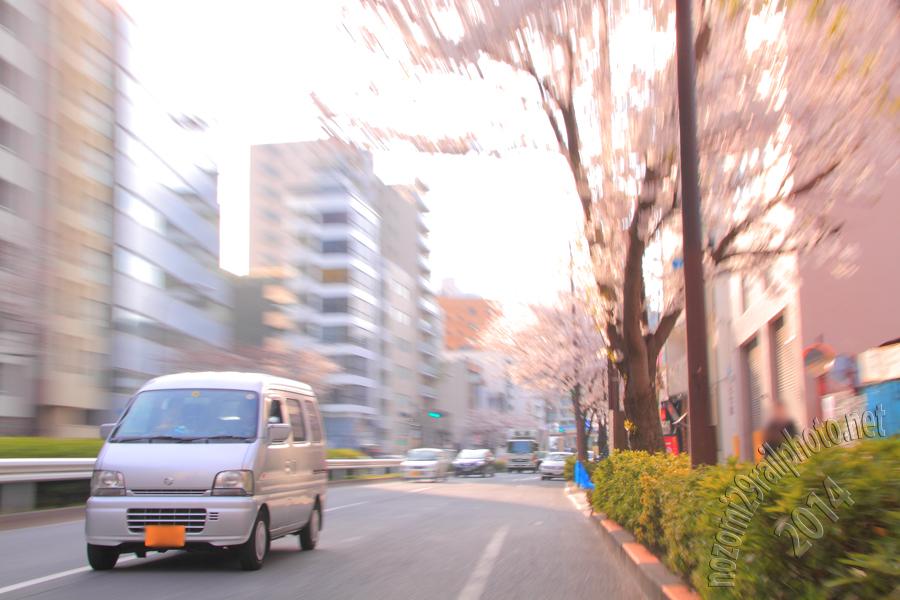sakura-meijidori_03_