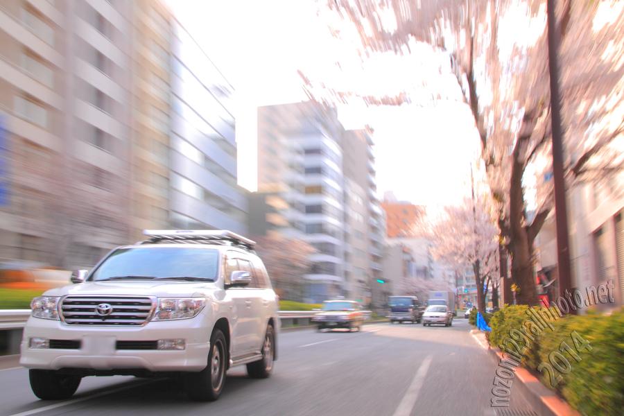 sakura-meijidori_04_