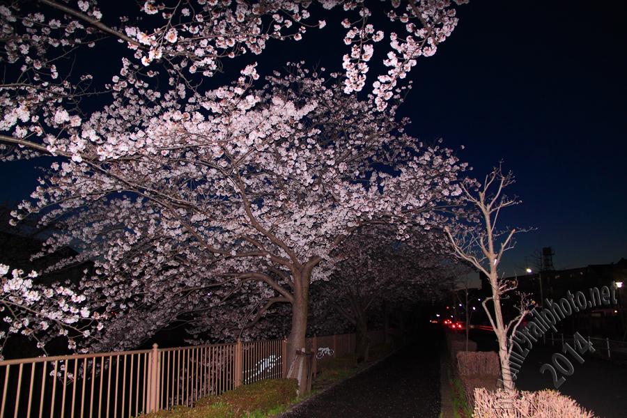 sakura-naruse_02_