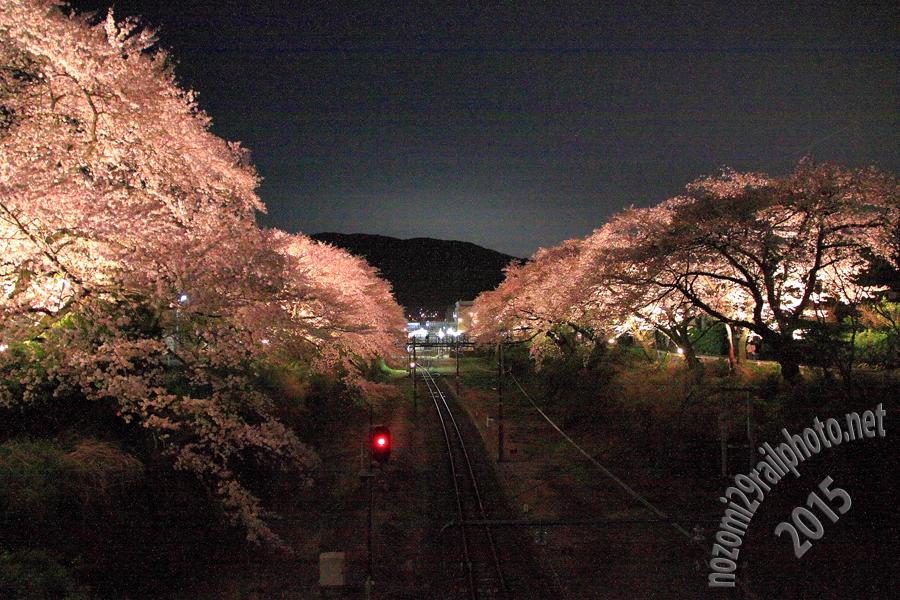 yamakita_sakura2015_09_